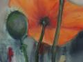 Orange-poppies-e1441791605216